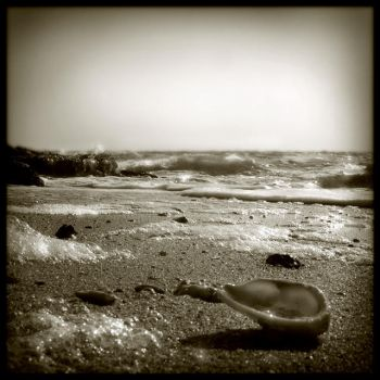 Sand and shells 5 by Renoux