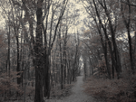 Lonely Trails by Shadowstep990