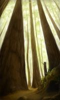 Redwood Forest by Amaruuk