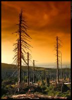 Forest of death 2 by mjagiellicz