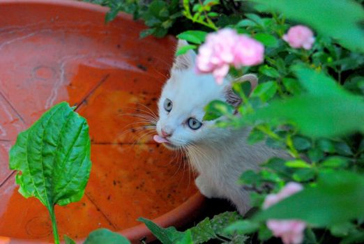 Cute Cat by GiN-photo-by-Nic