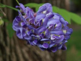 Wistera by thelilartist