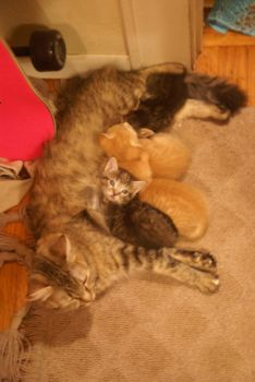 Magellan and Her Babies by KW-Scott