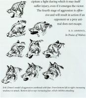 Wolf flight or fight expression refernce by MoonandSky