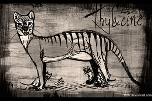 Thylacine Pen 2-Mother n Pups by DJ88