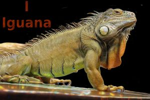 I is for Iguana by loloalien