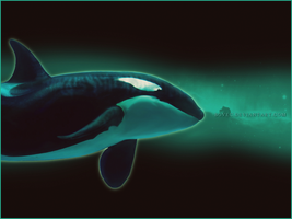 Space Orca by Bovec