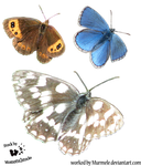Cut-out stock PNG 78 -three butterflies by Murmele by Momotte2stocks