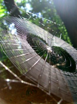 spiderweb by rua-art