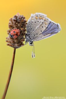 Ladybug and butterfly by patrykcyk