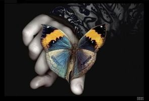 butterfly.. by neosix