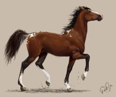 Title horse by LonGrand