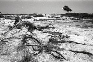 Roots by perpetual-arrhythmia