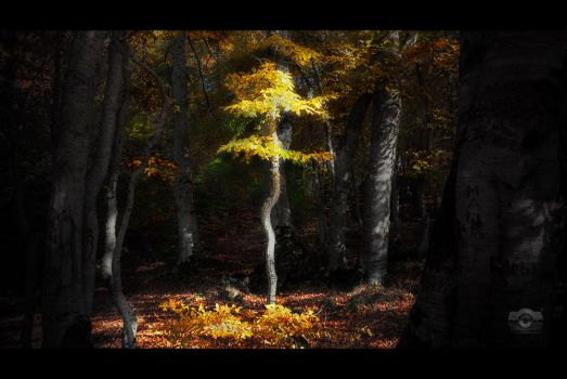 Lost in the forest by Bojkovski