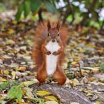 Mr. Squirrel by panna-cotta