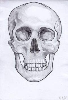 My obvious skull with shades. by mli1988