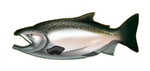 King (Chinook) Salmon by noebelle