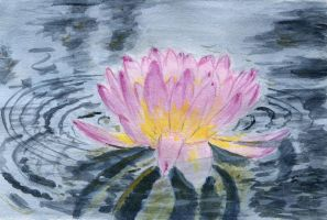 Water lily by 8Libelle8