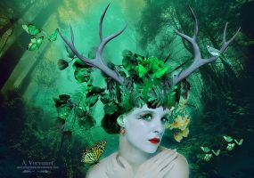 The most beautiful forest by annemaria48