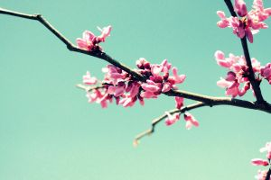 Blossoms by musicity