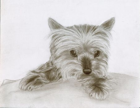 Yorkie 2 - Finished by ChristianCowgirl116